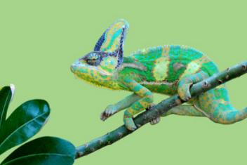 Farbiges Chamäleon als Symbol für anpassungsfähige Inhouse-Schulungen - Akademie Herkert